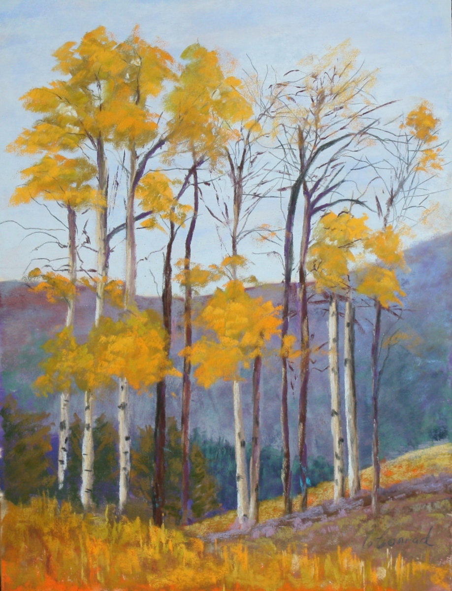 CPP238-Stand-of-Aspen